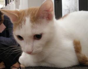 猫カフェ合コンの様子2