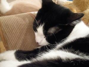 猫カフェ合コンの様子3